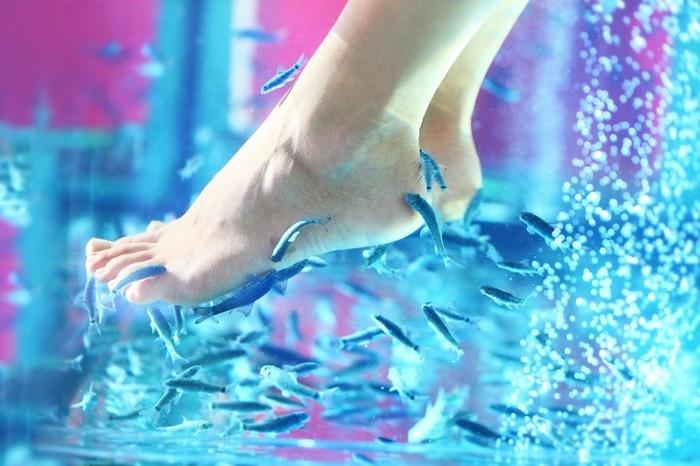 """Massage chân bằng cá bị """"rỉa"""" sạch 5 ngón chân"""
